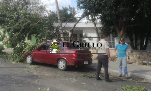 """Trailero rompió cables, arrancó un árbol y derribó un poste de la CFE, en la """"Miraflores"""""""