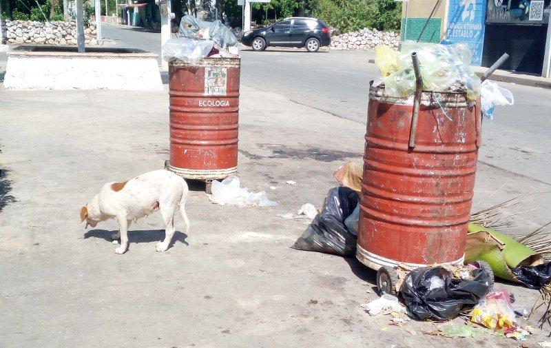 Anuncian plan de esterilización para perros y gatos gratuita en Ticul